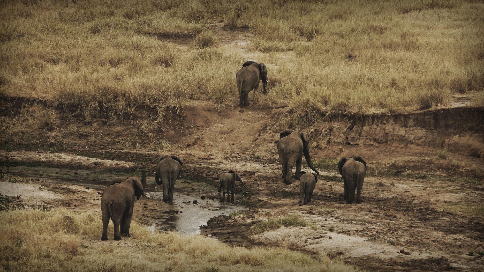 Tarangire National Park, Elephant Central
