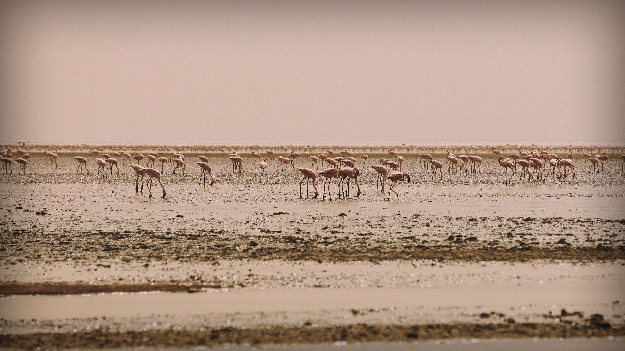 Lake Natron, Home of the Flamingo