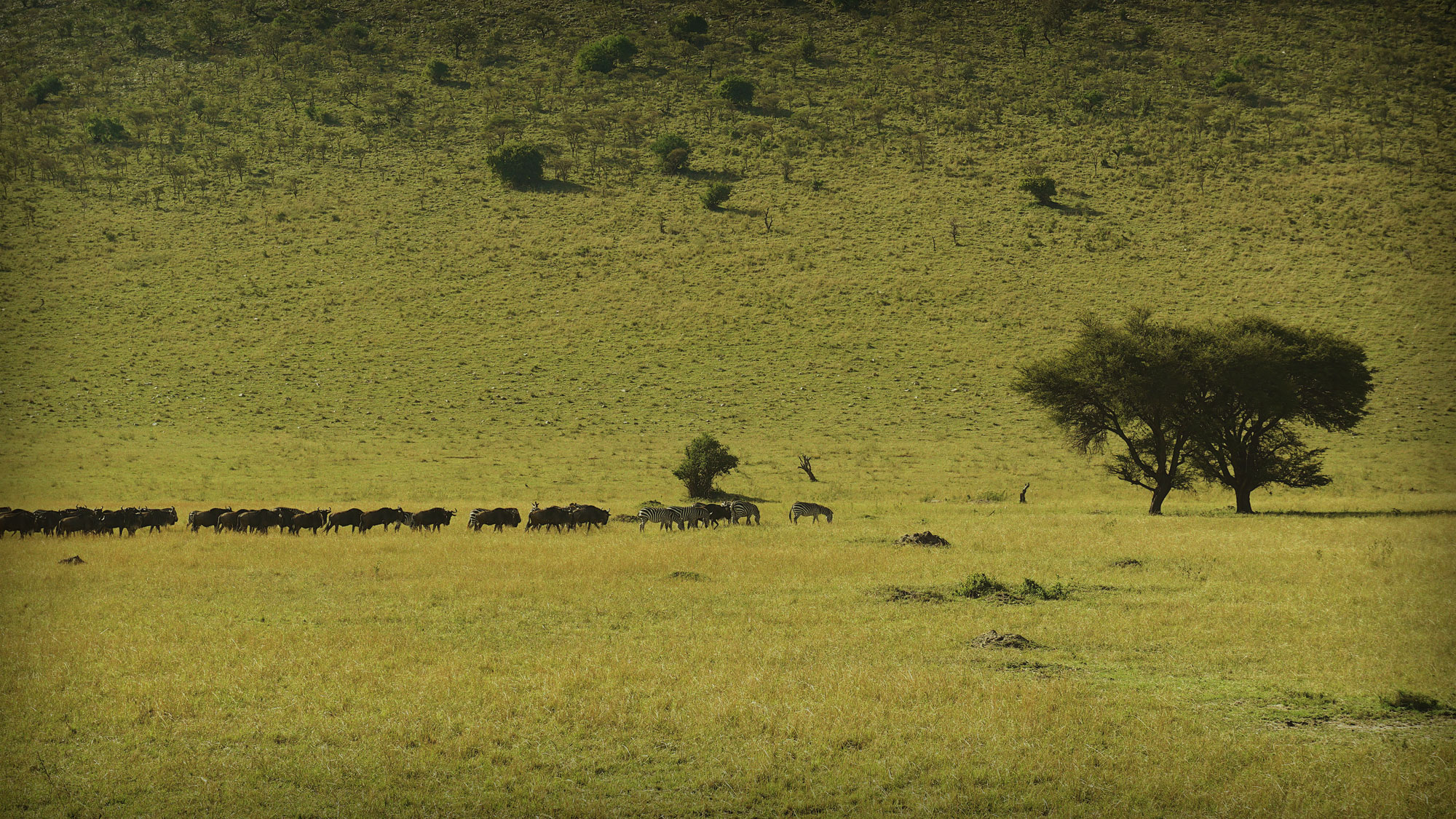 Serengeti & The Great Migration