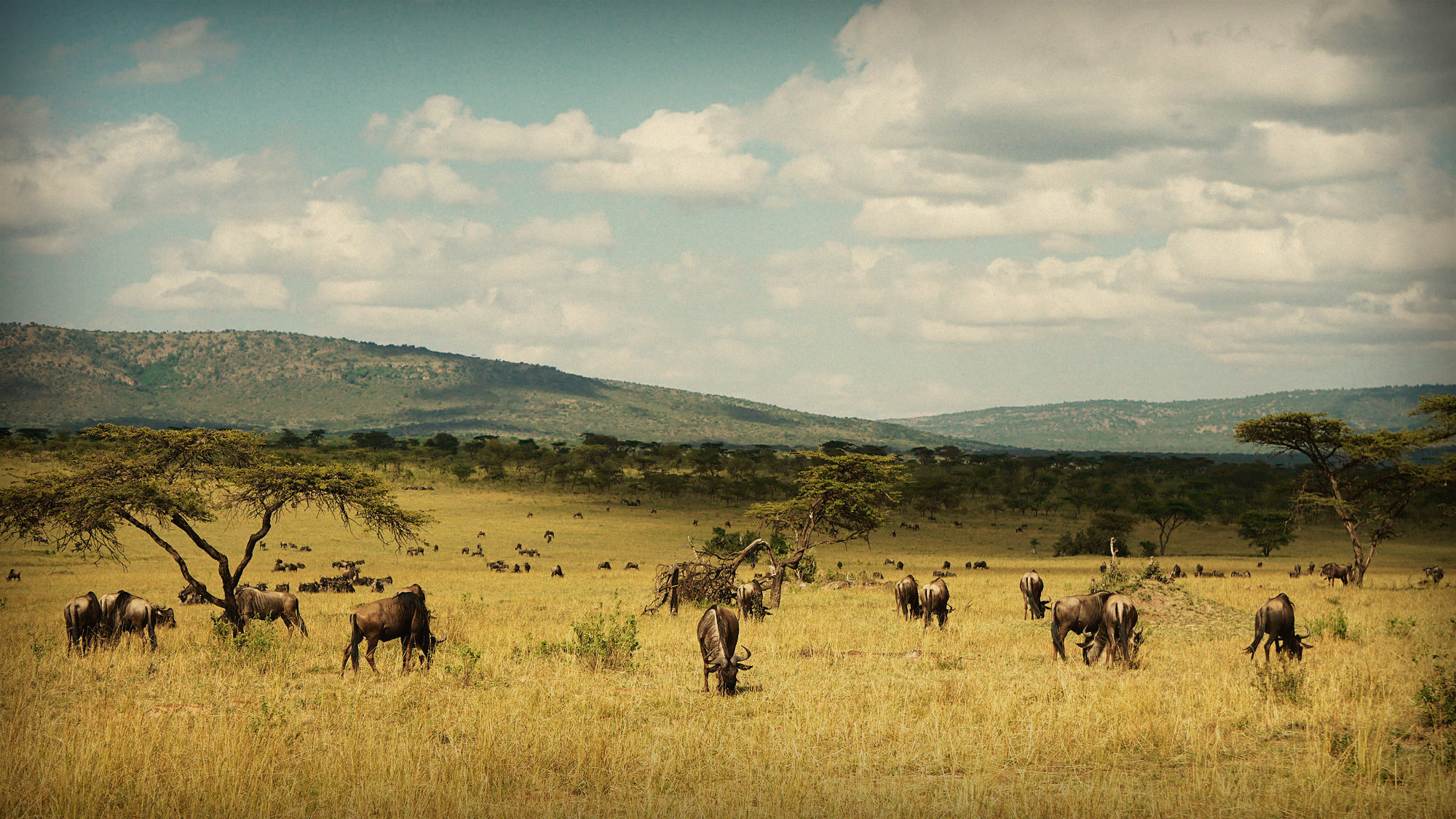 Video: Serengeti & The Great Migration